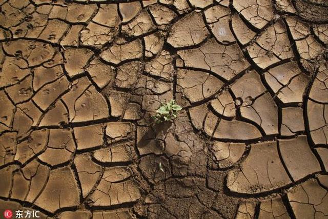 干旱的肯尼亚:干尸遍野