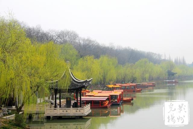 魅力三月扬州柳
